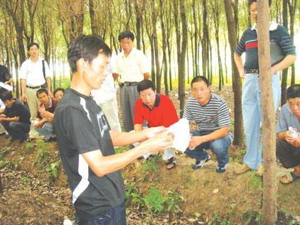 竹荪种植技术_育苗大户齐学竹荪种植技术